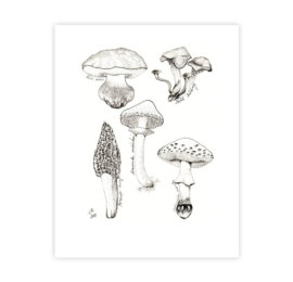 Přání pro houbaře